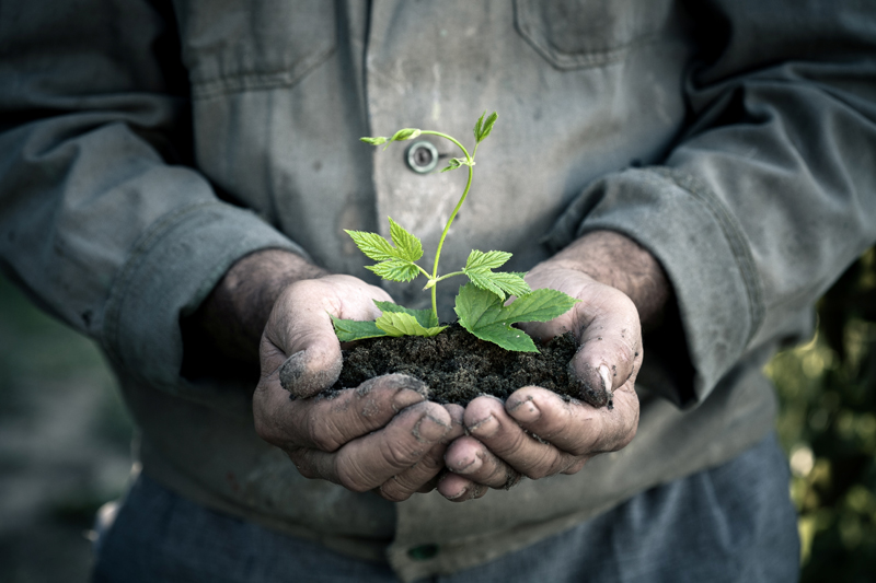 man holding seedling
